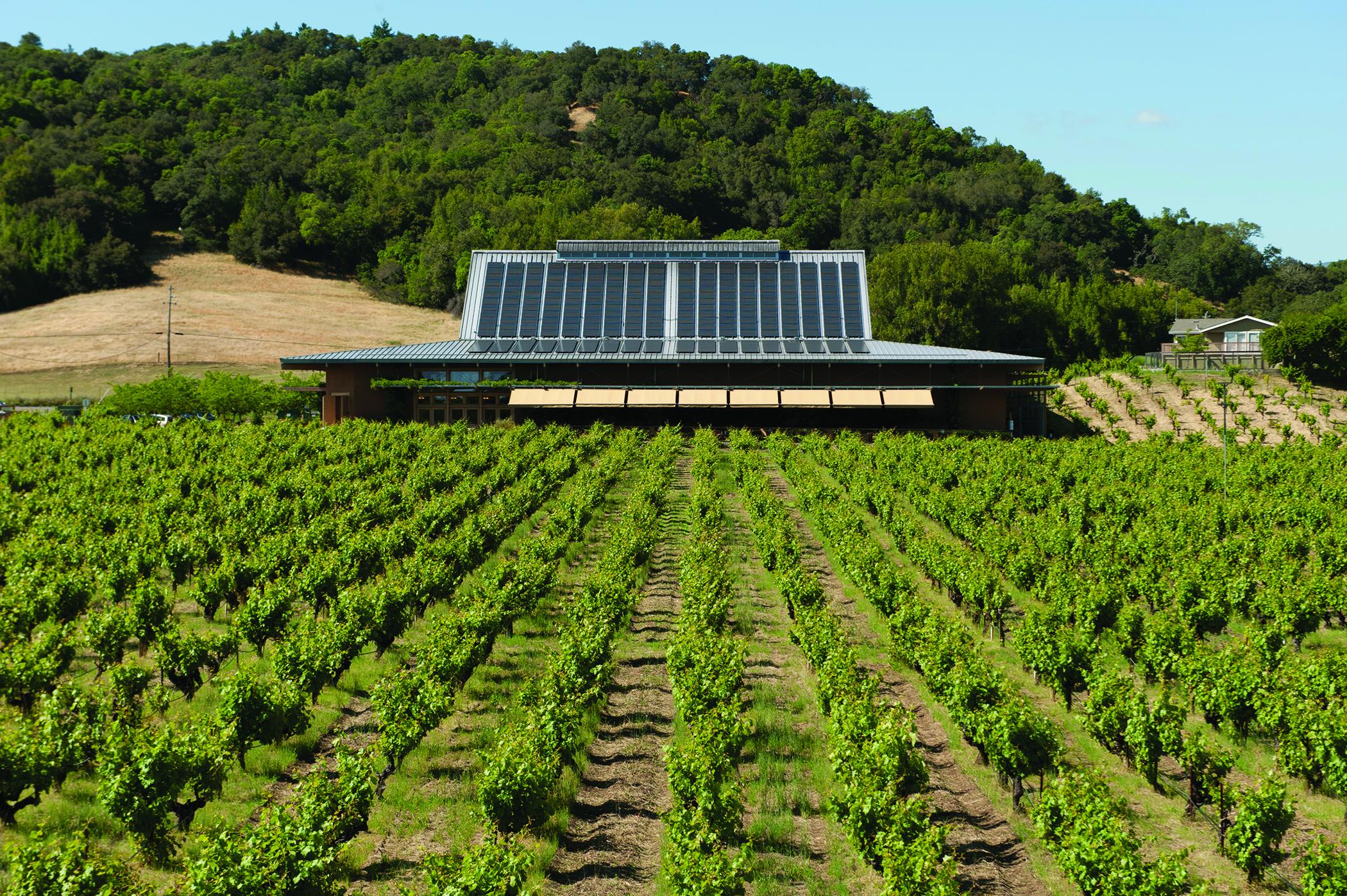 Ridge Vineyards, Lytton Springs, Dry Creek, Sonoma County